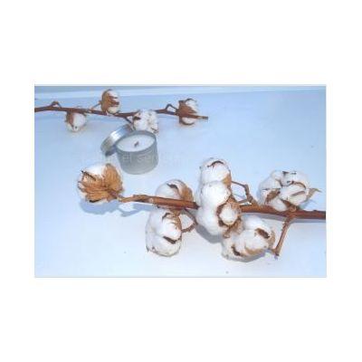 Bougie naturelle mèche en bois parfum fleur de coton