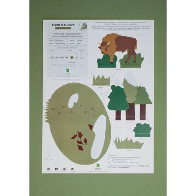 Diorama. Le bison d'Europe et son habitat.