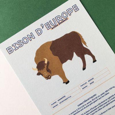 Fiche informative illustrée - Le bison d'Europe