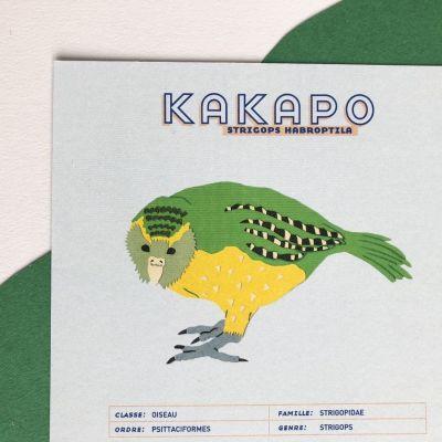 Fiche informative illustrée - Le Kakapo