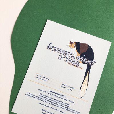 Fiche informative illustrée - L'écureuil géant d'Inde