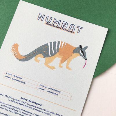 Fiche informative illustrée - Le numbat