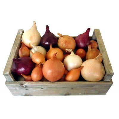 Oignons comestibles - Blanc en mottes
