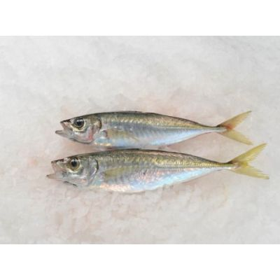 Gascons Sauvages (Chinchards) - 500g