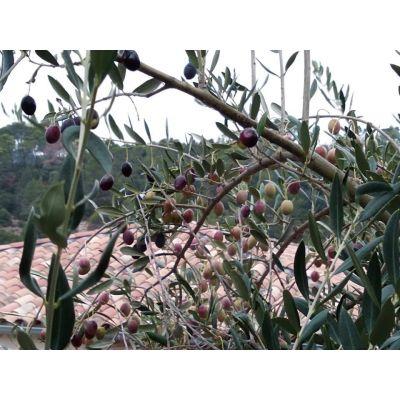 Bidon de 5 L (Commande pour récolte 2020) Fruité Mûr