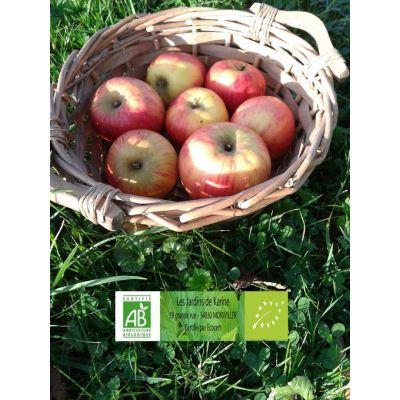Pommes Reine des Reinettes BIO