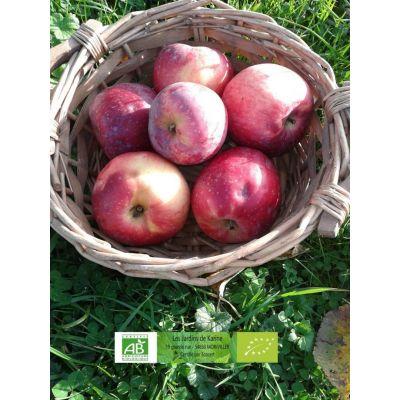 Pommes Reinette étoilée BIO