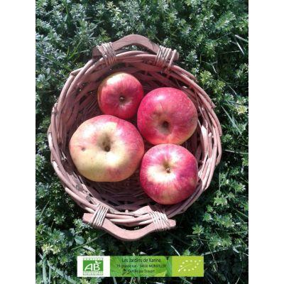 Pommes Rambour du Rhin BIO