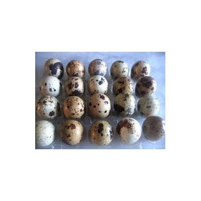 Lot de 18 oeufs de cailles à couver +  2 verrines de caille 190 gr (terrine au pineau des charentes et rillettes nature)