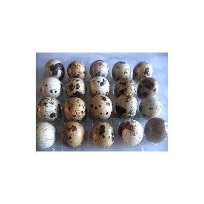170 OEUFS de caille à couver ( ou oeufs de caille fécondés). Race COTURNIX COTURNIX JAPONICA