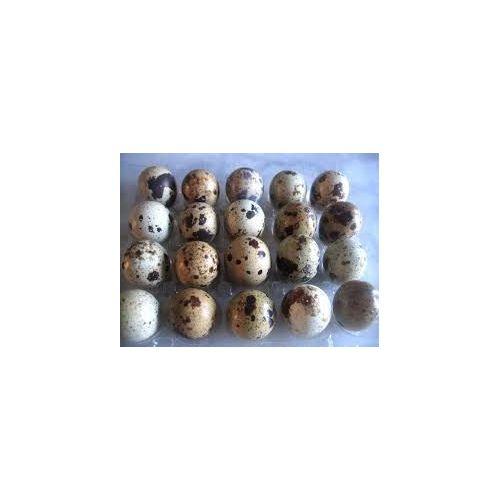 Lot de 85 OEUFS de caille à couver + 1 terrine de caille 190 gr