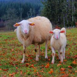 """photo de """"Ferme Revenons à Nos Moutons"""""""