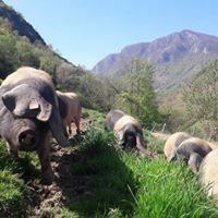 photo de Les Porcs de Laünde