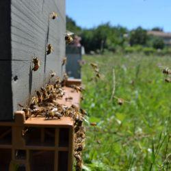 logo de le rucher de l'abeille charentaise