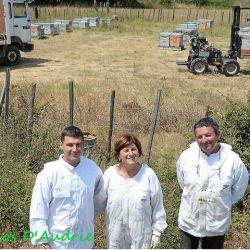 photo de Le rucher du Clos d'Audrie
