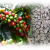 logo de Café des Îles