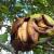 Les noix de buis